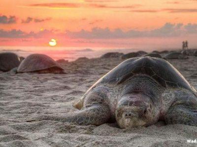Turtle Reserve26