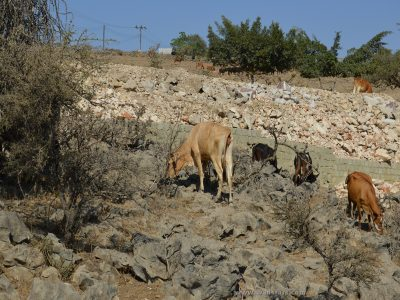 Mirbat Dhofar Mountain Oman destinations travel by wadstars