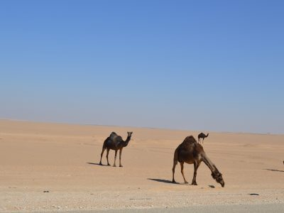 Al mazyunah Dhofar Oman 95